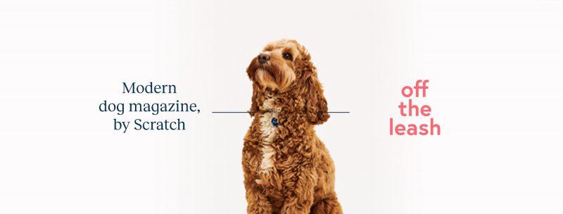 dog magazine
