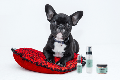 CBD dog product advert
