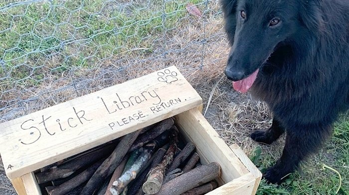 stick library for dogs